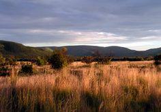 African Bushveld