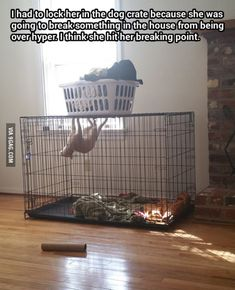 Spider-Cat, Spider-Cat, does whatever a Spider-Cat does...