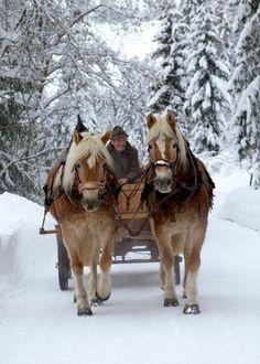 "Horse drawn sleigh rides Tiroler Haflinger ""Nina & Nora"" by Ernst - the senior landlord."