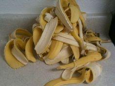 Adubo caseiro: Cortamos a casca de banana aos peKdaços bem pequenos e juntamos ao solo perto das plantas. Tritura a casca de banana no liquidificador juntamente com 1 litro de água ( para 5 cascas de banana 1 litro água) Também pode secar a casca da banana usando um desidratador eléctrico, solar ou usando o calor residual do forno a lenha, gaz ou eléctrico depois de seca triture e junte água.(por cada litro usar 7 a 8 cascas de banana).