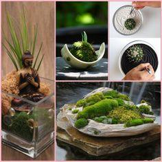 mini zen garten anlegen moos ideen | green luxury/ garden, Garten und Bauen