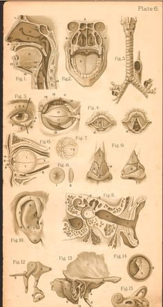 vintage medical anatomy illustration