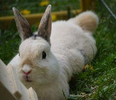 Large, gorgeous bunny!