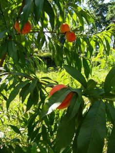 How To Grow Fruit Trees From Seeds (And Why You Should!)
