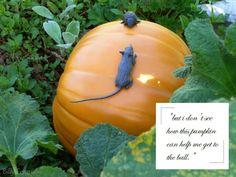 Cinderella fairy tale pumpkin.