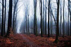 I love nature!!
