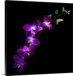 """""""Purple Dendrobium Orchids"""" by Magda Indigo via @greatbigcanvas at GreatBIGCanvas.com."""