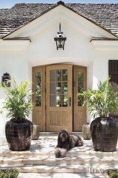 Contemporary Cream Front Walkway with Dog