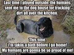 this has Roxy written ALL over it anim, funny dogs, silly dogs, pet, funni, dog houses, puppi, lab, bath time