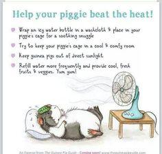 Beat the Heat !