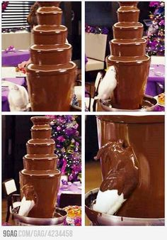Funny pictures about More Chocolate Please. Oh, and cool pics about More Chocolate Please. Also, More Chocolate Please photos. Funny Birds, Cute Funny Animals, Funny Animal Pictures, Funny Photos, Hilarious Pictures, Dank Pictures, Videos Funny, Humor Videos, Random Pictures
