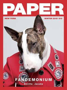 Animal instinct: Although not the most likely of cover stars, designer Marc Jacobs' bull terrier Neville looked more than comfortable in front of the cameras, posing in a red military-inspired jacket Magazine Layout Design, Magazine Cover Design, Paper Magazine Cover, Magazine Covers, Vanity Fair, Celebrity Dogs, Daily Front Row, New York Winter, Editorial