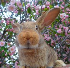 Bunny blossoms.