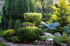 New landscape backyard privacy pools 63 ideas Evergreen Landscape, Evergreen Garden, Amazing Gardens, Beautiful Gardens, Boxwood Garden, Woodland Garden, Garden Cottage, Front Yard Landscaping, Backyard Privacy