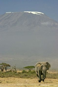Amboseli National Park at the base of Mt. Kilimanjaro, Nairobi, Kenya