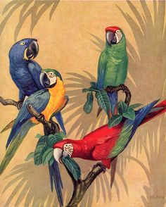 Vintage Tropical MACAW parrot bird BLUE Red Green by elevenvintage, $9.99