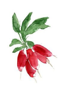 Smal Radish bouquet original watercolor painting by TheJoyofColor, $52.00