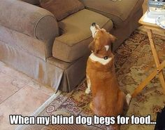 Funny Animal Pictures Of The Day - 23 Images