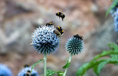 Flight of the Bumble Bees - Explore 24.10.13   by Peaf79