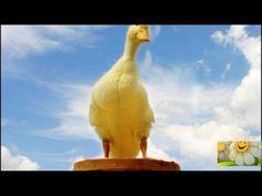 Abraham Hicks , Best on Complaining - really good segment - YouTube