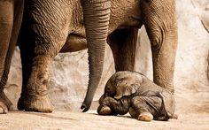 Baby elephants make me smile!