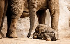 Baby elephants make me smile!