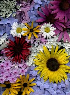 Flower Bouquet. The contrast of flowers and shades create a bright and colourful display, ideal for any garden.