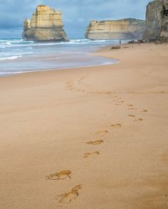 Foot print in the sand #adventure #beach #footprints #12apostles #greatoceanroad #melbourne #australia #awesome #tagsforlikes #instagood #me #follow #photooftheday #followme #picoftheday #instadaily #igers #like4like #instalike #amazing #tflers #bestoftheday #likeforlike #instafollow #throwback #photo #travel #travelgram #travelphotography
