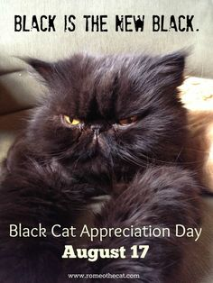 Black Cat Appreciation Day #blackcatappreciationday #blackcatsrule