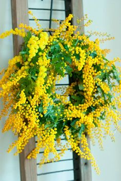 wreath On March in Venice, the men give their women Mimosas. :)On March in Venice, the men give their women Mimosas. Deco Floral, Arte Floral, Mimosas, Yellow Cottage, Wreath Crafts, Wreath Ideas, Shades Of Yellow, Front Door Decor, Mellow Yellow