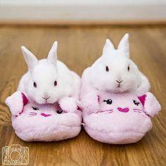 Bunnies in slippers! Too cute!