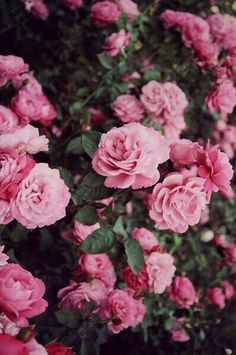Wallpaper Iphone Vintage Flowers Photography Pink Roses 18 Ideas For 2019 Flower Iphone Wallpaper, Flower Backgrounds, Aesthetic Iphone Wallpaper, Flower Wallpaper, Aesthetic Wallpapers, Iphone Wallpapers, Wallpaper Backgrounds, Wallpaper Desktop, Pink Wallpaper