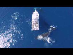 Breathtaking footage shows humpback whales circling boat (VIDEO) — RT Viral
