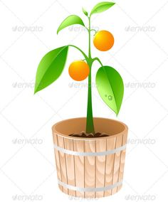 DOWNLOAD :: https://realistic.photos/article-itmid-1002477759i.html ... Orange Tree in a Wooden Tub ...  citrus, decorative, dew, floral, flowerpot, fresh, fruit, garden, grapefruit, green, leaf, nature, orange, plant, ripe, tree, tub, vector, wooden  ... Templates, Textures, Stock Photography, Creative Design, Infographics, Vectors, Print, Webdesign, Web Elements, Graphics, Wordpress Themes, eCommerce ... DOWNLOAD :: https://realistic.photos/article-itmid-1002477759i.html