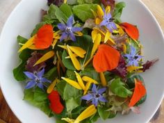 Edible flowers can brighten up a gloomy day or give a new flavor to your favorite dish. Preschool Garden, Gladioli, Parts Of A Plant, Small Space Gardening, New Flavour, Edible Flowers, Balcony Garden, Vegan Recipes, Herbs
