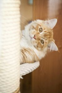 Cats and scratching: Practical Tips for Owners - http://dogandcatbehaviorproblems.com/dog-cat-behavior-problems/cats-and-scratching-practical-tips-for-owners/