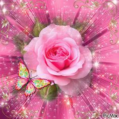 The perfect Floral Pink Butterfly Animated GIF for your conversation. Roses Gif, Flowers Gif, Beautiful Rose Flowers, Beautiful Gif, Beautiful Butterflies, Beautiful Morning, Dank Gifs, Pink Roses, Pink Flowers