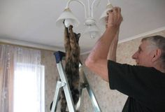 A Cat that can do house repairs, who needs a man then?  http://www.funnykittycatpictures.com/cat-lovers-who-went-to-far/
