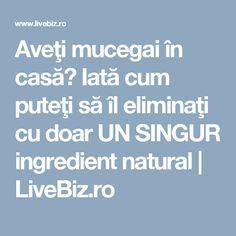 Aveţi mucegai în casă? Iată cum puteţi să îl eliminaţi cu doar UN SINGUR ingredient natural | LiveBiz.ro Good To Know, Diy And Crafts, Cleaning, Health, Pandora, Plant, Health Care, Healthy, Salud