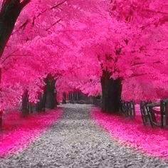 wherever this is, i need to go. i love everything pink.