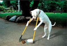 箒を使って掃除する犬【動物おもしろ画像】: 【厳選】動物おもしろ動画・画像!