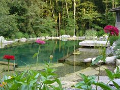 Natural swimming pool chemical-free pool flowers landscaping - John's Pools & Ponds, ON - BioNova