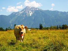 Farm House Natural Cheese, just around the corner in beautiful Agassiz, BC