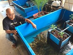 Effendy designed this simple and neat aquaponics system to fit small homes.