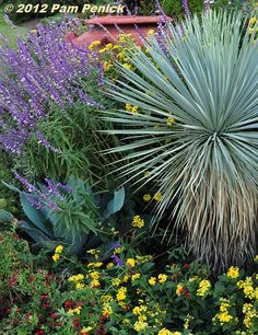 Native perennials and groundcovers  Hill Country Water Gardens & Nursery