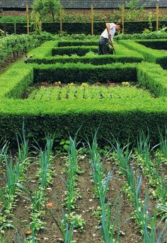 Veggie Garden with Formal Hedges Potager Garden, Veg Garden, Garden Shrubs, Edible Garden, Garden Beds, Garden Landscaping, Shade Garden, Vegetable Gardening, Kitchen Gardening
