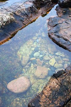 Natural history, beachcombing, travel, and life on a Maine island. Underwater Painting, Fantasy Forest, Tide Pools, Water Reflections, Rock Pools, Belleza Natural, Natural World, Nature Photos, Strand