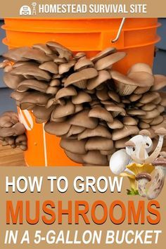 Garden projects 387802217916664164 - Mushrooms are easy to grow in the right conditions. Here is a simple way to grow mushrooms in a bucket using woodchips and mushroom spawn. Source by cariboovalley Homestead Survival, Survival Prepping, Survival Gear, Survival Skills, Survival Supplies, Wilderness Survival, Outdoor Survival, Oyster Mushroom Spawn, 5 Gallon Buckets