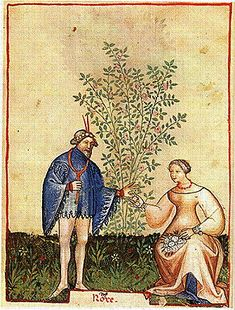 Picking rose hyps. The Tacuinum of Paris - late 14th century
