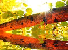 Fall scene in the sunshine
